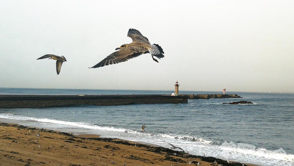 Praia do Carneiro