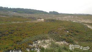 Reserva Ornitológica do Mindelo