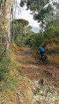 Bosque de pinos y eucaliptos