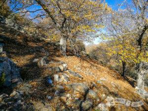 Ascenso entre castaños por el Valle del Viejas