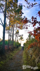 Pista de pinos y eucaliptos