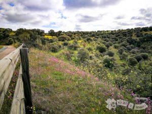 Vía Verde de la Jara