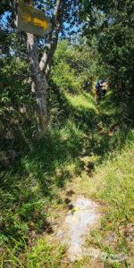 Camino encajonado en vegetación