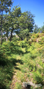 Sendero casi imperceptible por la vegetación