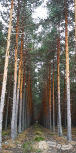 Pista de pinares