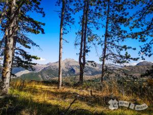 Ascenso a la pista forestal
