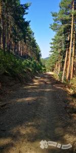 Descenso por la pista forestal