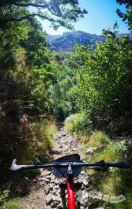 Hacia el bosque de El Paleiro