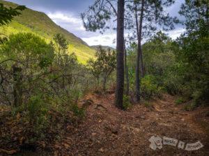 Barranco del Valle de la Palma