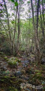 Barranco del Dundún (Arroyo de Valdelarco)