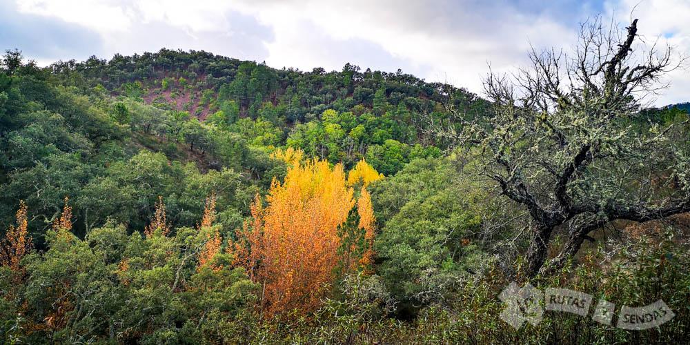 Vegetación de rivera describuedo el cauce de arroyos