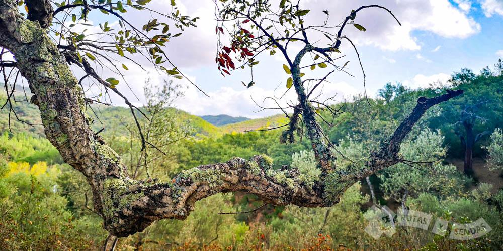 Detalle mirando al Valle de las Murtiguillas