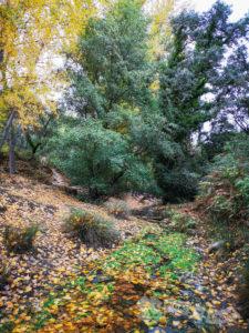Tapizado de hojas