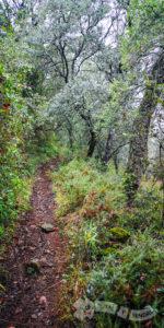 Sierra de la Picota