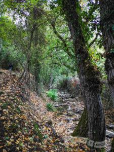 Siguiendo el curso del arroyo