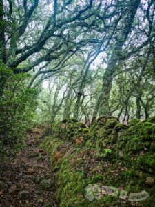 Cerro de Juan de Soria