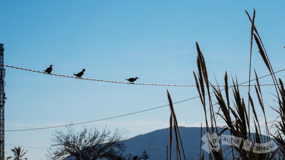 Cormoranes a la vista