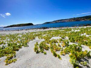 Playa da Ermida e Isla de Estrela