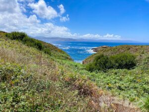 Playa da Insua oculta por la vegetación